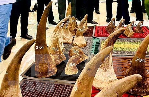 Vietnam hands over rhino horn DNA samples to South Africa hinh anh 1