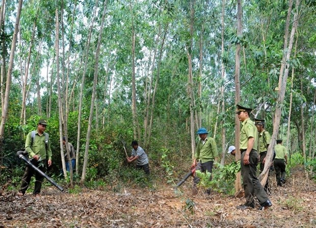 Minister urges localities to prepare to fight forest fires hinh anh 1