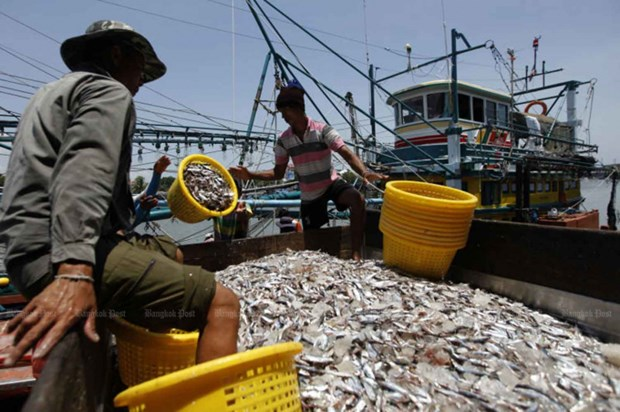 Thai government promotes sustainable fishing hinh anh 1