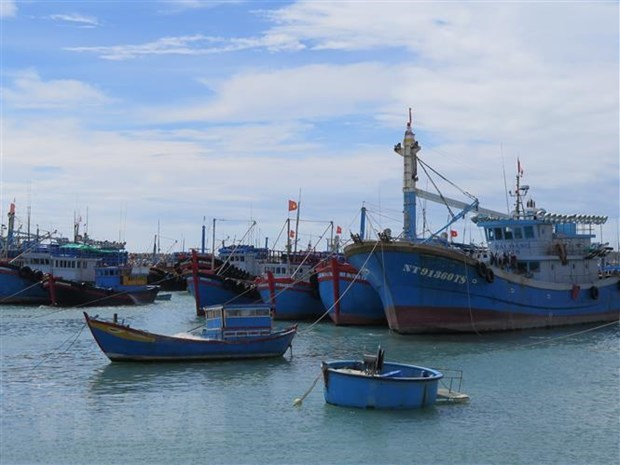 Organisations, individuals involved in IUU fishing to be punished strictly hinh anh 1