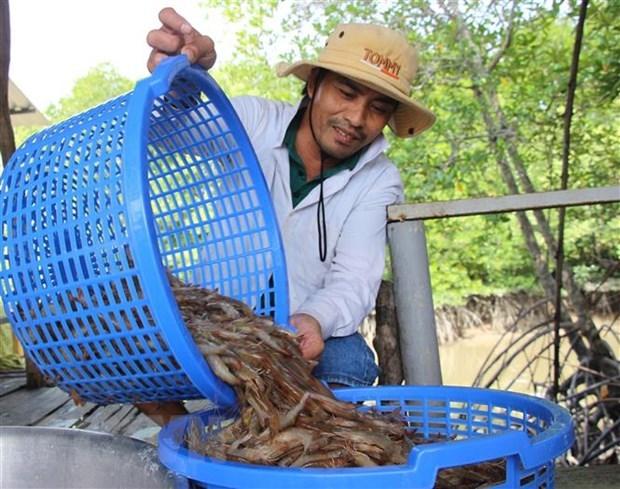 Tra Vinh shrimp output up over 6,000 tonnes hinh anh 1