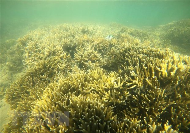 Ninh Thuan works to protect marine bio-diversity hinh anh 1