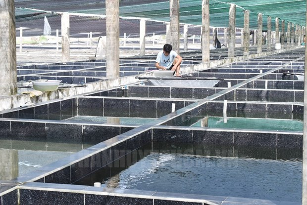 Ho Chi Minh City aims to promote hi-tech use in agriculture cooperatives hinh anh 1