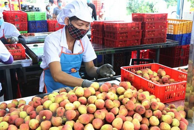 Vietnam sees surge in farm produce exports to China hinh anh 1