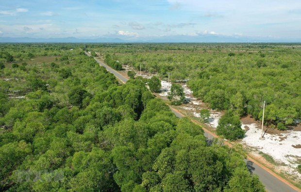 Ben Tre province to plant 10 million trees in five years hinh anh 1