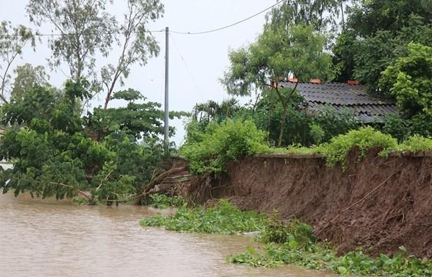 Erosion detected in Ca Mau's coastal embankment hinh anh 1