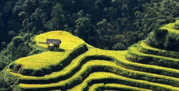 Ha Giang to host culture week highlighting terraced rice fields hinh anh 1