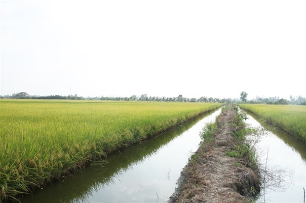 Pak Liu mở rộng sản xuất nông nghiệp quy mô lớn hinh anh 1