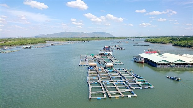 Ba Ria – Vung Tau protects its valuable marine resources hinh anh 1