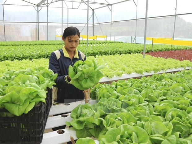 Nearly 36 percent of public investment for agriculture disbursed in six months hinh anh 1