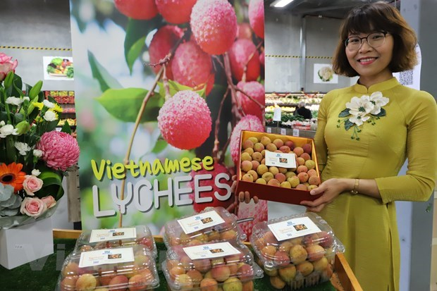 """Vietnamese lychee becomes """"hot item"""" in Australia hinh anh 1"""