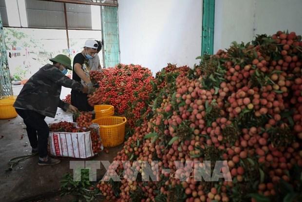 Vietnamese lychees reach EU consumers through e-commerce platform hinh anh 1