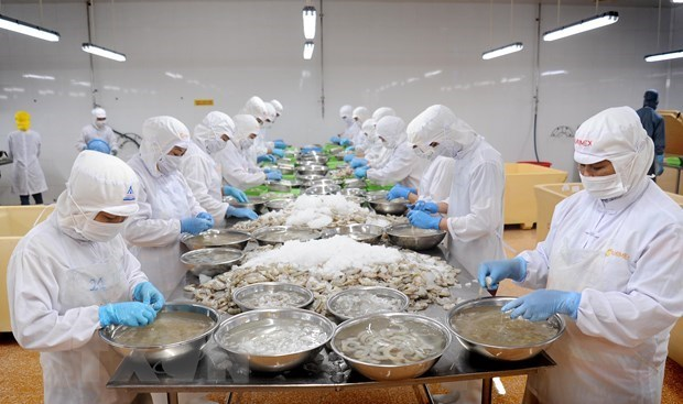 Ca Mau posts growth in shrimp exports in H1 despite pandemic hinh anh 1