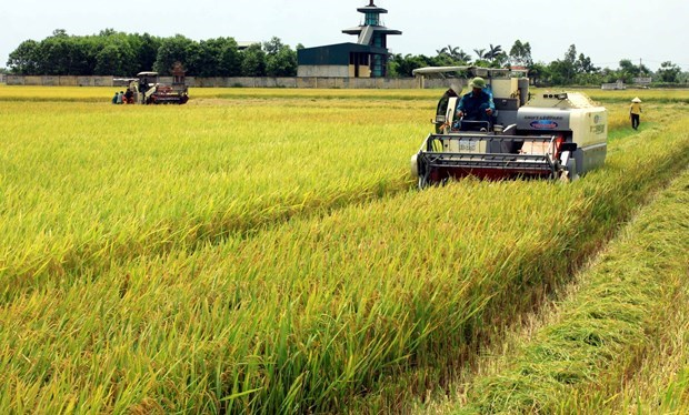 Vietnam's supporting policies contribute to higher level of mechanisation in agriculture hinh anh 1