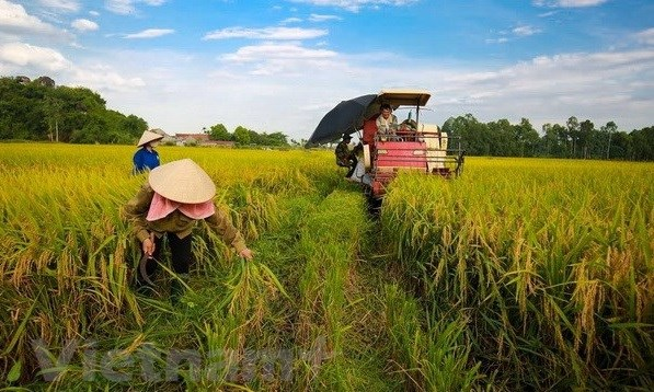 Minister: Vietnam looks towards sustainable agriculture hinh anh 1