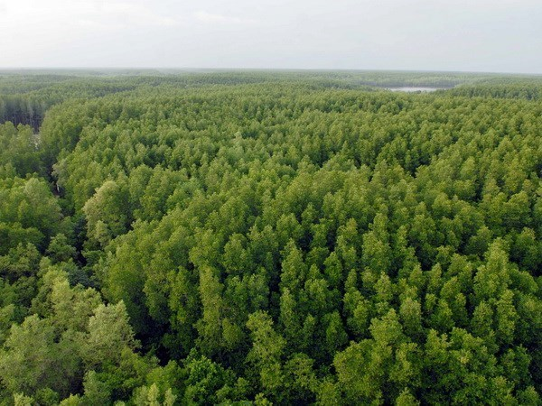 Close to 108,260 ha of new forest planted during year's first half hinh anh 1