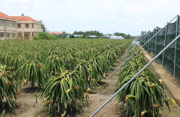 Australia – a potential market for Vietnamese organic agricultural products hinh anh 1