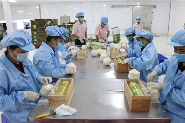 Ben Tre's export turnover up 14.1 percent in six months hinh anh 1
