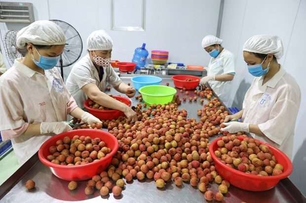 Bac Giang earns over 296 million USD from lychee sales in 2021 crop hinh anh 1