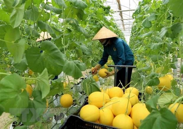 Australia helps Vietnam develop hi-tech agriculture hinh anh 1