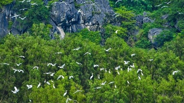 Vietnam promotes cooperation on nature preservation with WWF hinh anh 1