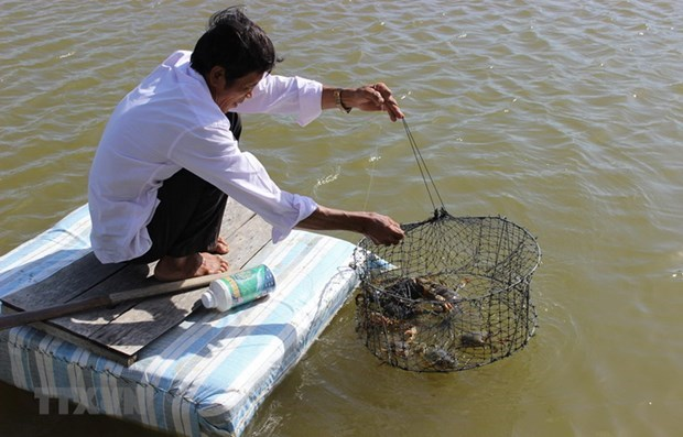 Ca Mau province acts to better protect environment in aquaculture hinh anh 1