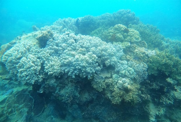 Local community takes lead in protecting Binh Dinh's coral reefs hinh anh 1
