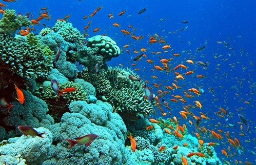 Efforts to revive and protect coral reef ecosystems in Ha Long Bay hinh anh 1