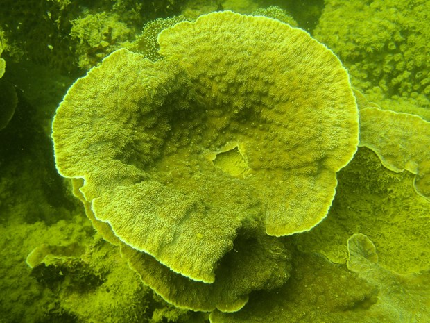 Efforts to revive and protect coral reef ecosystems in Ha Long Bay hinh anh 2