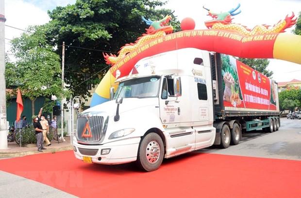 Son La longan exported to EU, UK markets hinh anh 1