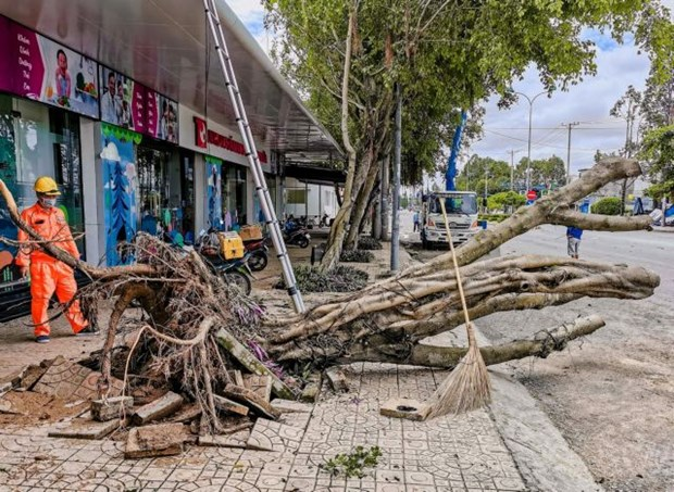 Strong winds, rains kill two in Mekong Delta, destroy houses, trees hinh anh 1