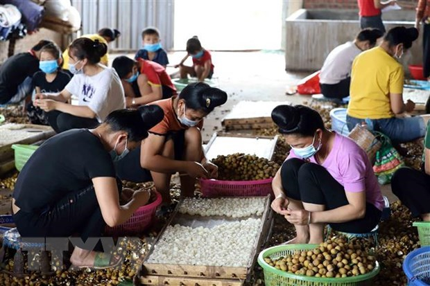 Policy dialogue promotes ASEAN women's role in agriculture hinh anh 1