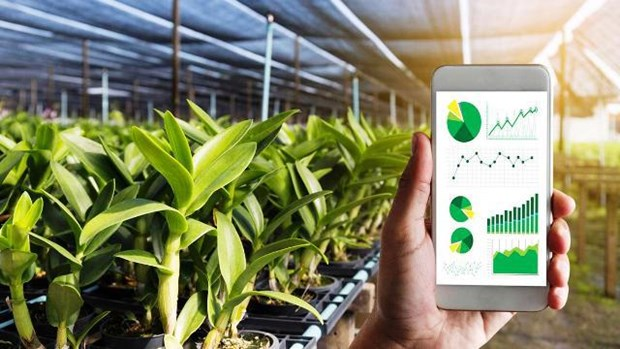 Vinh Phuc prioritises digital transformation in agriculture hinh anh 1
