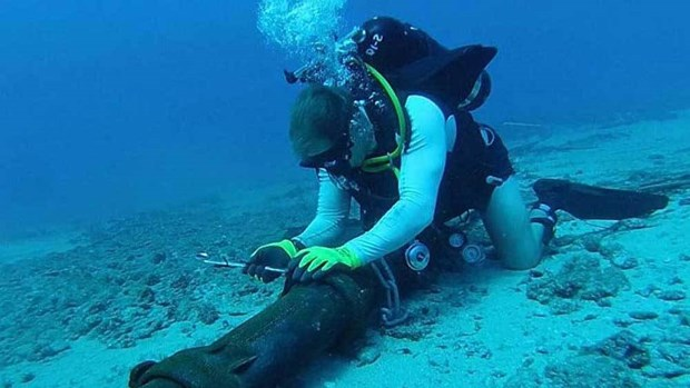 AAG undersea cable fixed, restoring internet speed in Vietnam hinh anh 1