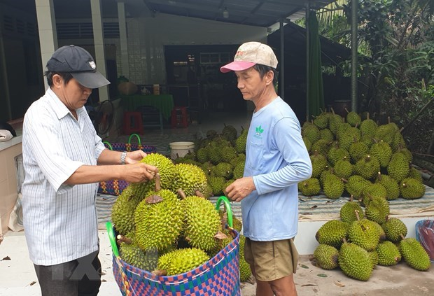 Vietnam's Ri6 durian sells well in Australia hinh anh 1