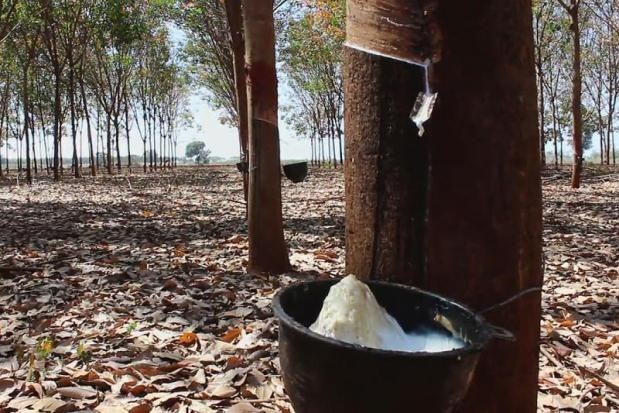 Malaysia's rubber exports soar in first half hinh anh 1