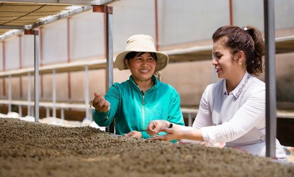 King Coffee announces project connecting farm produce suppliers hinh anh 1