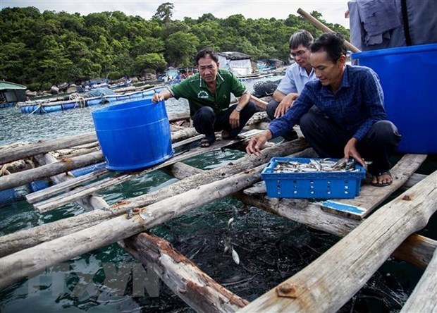Kien Giang develops marine aquaculture towards sustainable development hinh anh 1