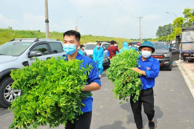 Hanoi's youths join hands to fight pandemic hinh anh 1