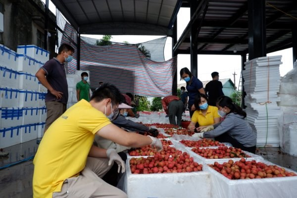 Vietnam aims to connect 5 million farming households to e-commerce platforms hinh anh 1