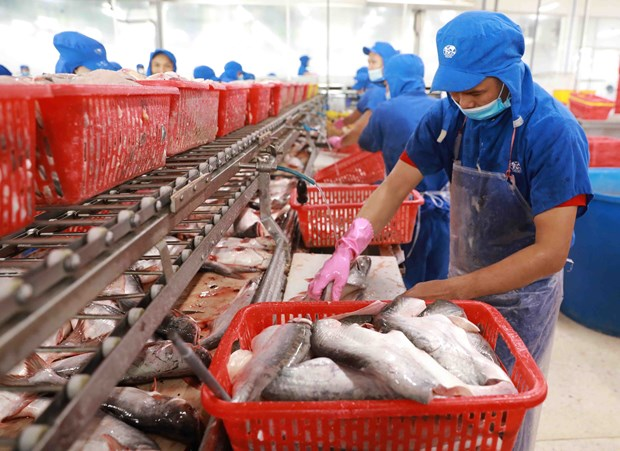 Vietnam poised to become world's leading seafood processing centre hinh anh 1