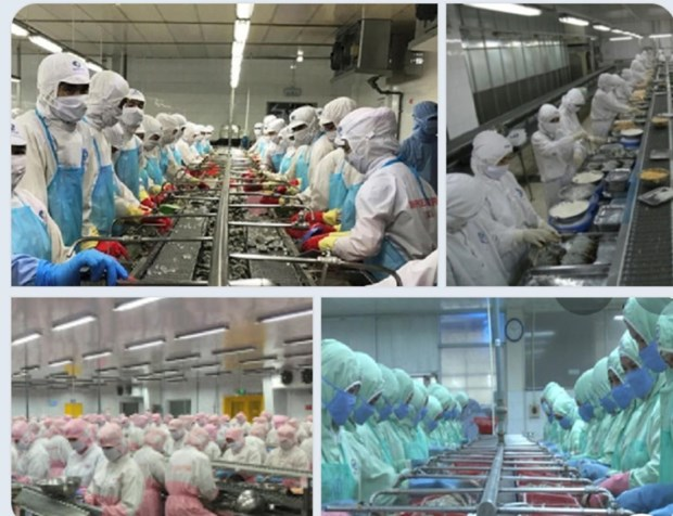 Soc Trang's export up 19 percent in eight months hinh anh 1