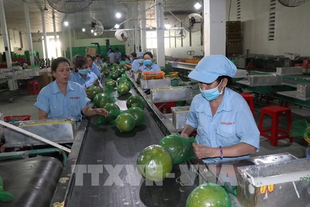 Ben Tre aims to have four agricultural value chains reaching 1 billion USD by 2030 hinh anh 1