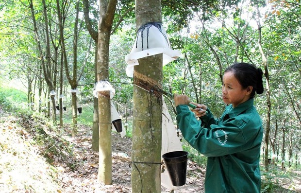 Rubber exports enjoy growth during January-July hinh anh 1