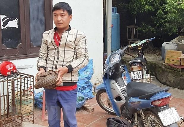 Wildlife traffickers arrested in northern Dien Bien province hinh anh 1