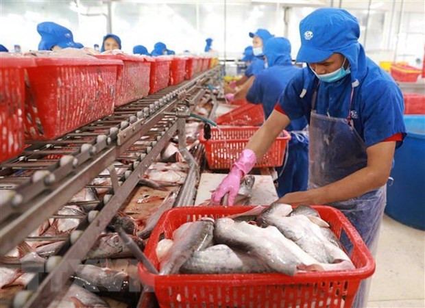 Aquatic product exports plunge during social distancing hinh anh 1