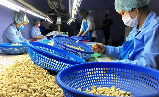 Vietnamese cashew nuts increase market's share in Russia hinh anh 1