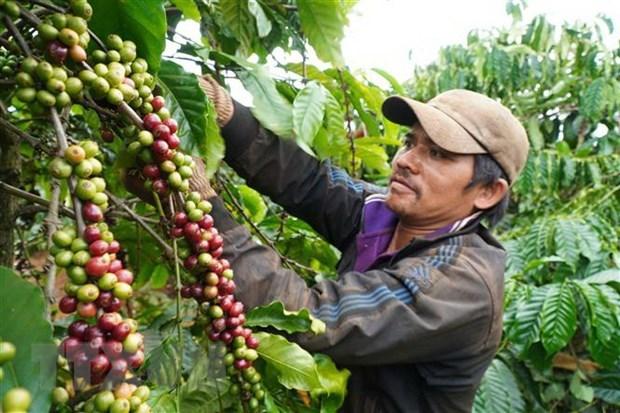 Việt Nam và Úc hợp tác thương mại thực phẩm hữu cơ hinh anh 1