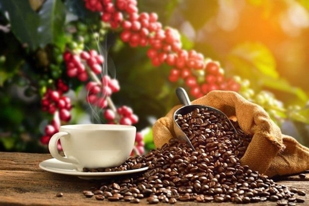 Coffee tourism offers chance for Vietnam's agro-tourism: webinar hinh anh 1