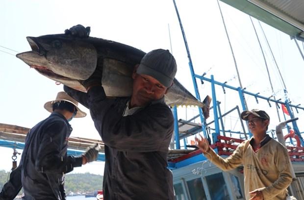 Việt Nam trở thành nước xuất khẩu cá ngừ lớn nhất của Israel